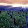 Spring Sunset Over Napa Valley, Oakville, California