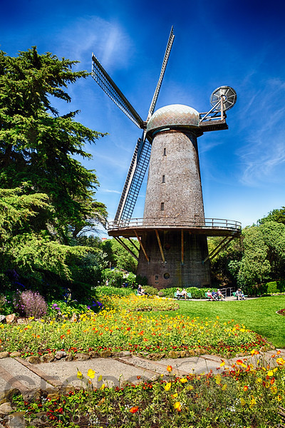 Dutch Windmill with Blooming Tulips and Poppies