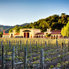 Vineyard Scenic, Close Pegase Winery, Calistoga, Napa Valley, California