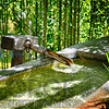Bamboo Spring Purity