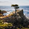 Lone Cypress Tree,  Pacific Coastline at Pebble Beach< Monterey Peninsula, California