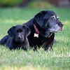 Rosie&Daisy_20170927_2008
