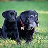 Rosie&Daisy_20170927_2005