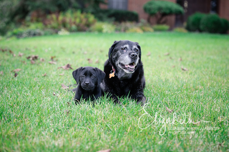 Rosie&Daisy_20170927_2001