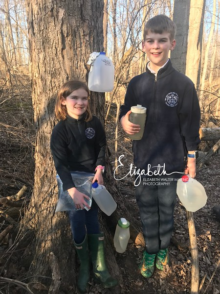 Maple Tapping_20190226_1001