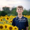 Sunflowers_20200822_2017