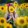 Sunflowers_20200822_2013