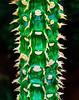 Cactus Ladder