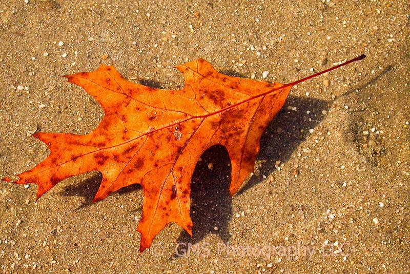 Leaf floating on water in tidal area of Sandy Hook, NJ