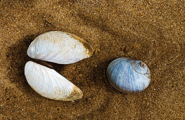 Arrangement of shells on bay beach at Sandy Hook, New Jersey creates a relationshp that appears to be pac-man chasing prey.