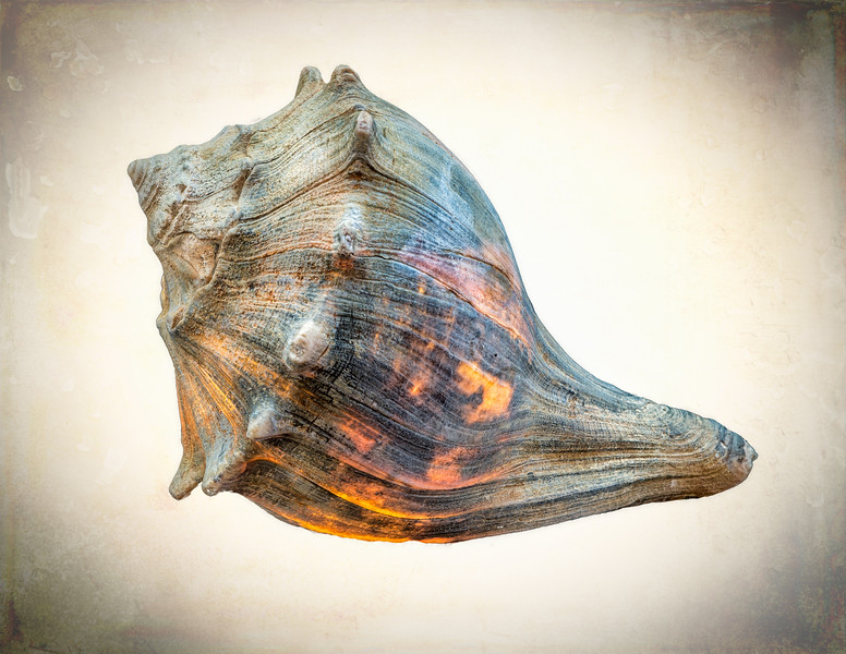 Glowing Conch Shell