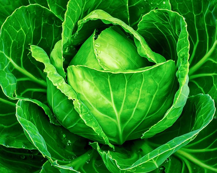 Cabbage Up Close