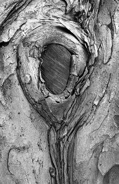 Old Tree Trunk In The Park