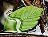 Resting Leaf In Strezm