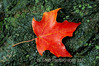 A late autumn leaf rests on contrasting testure of tree trunk at Holmdel Park, New Jersey.