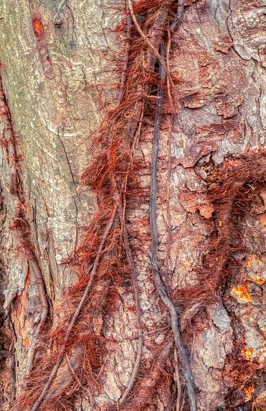 Hairy Vines And Bark Scales
