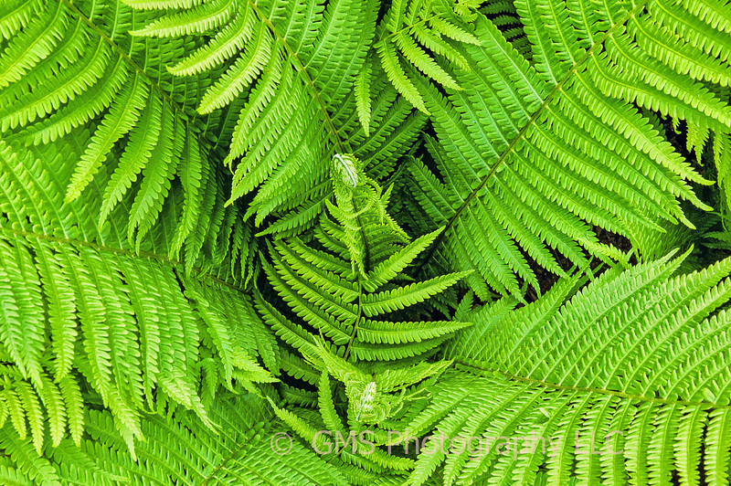 Ferns Below