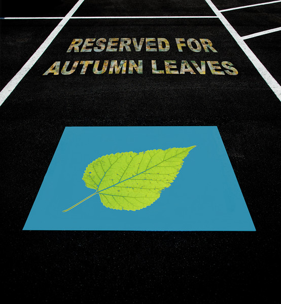 Parking Space Reserved For Autumn Leaves