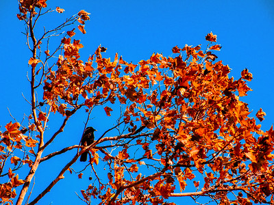 Must Be Fall - No leaves to hide me!
