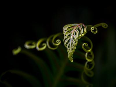 Jewel of the Vine