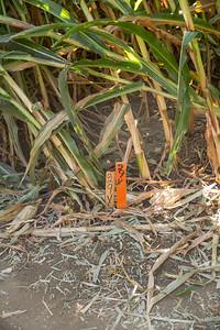 Corn_Maze-22.jpg