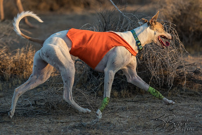 Free Coursing August 2016