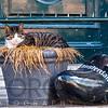 Cat in Amsterdam Resting Next to a Dutch Clogs