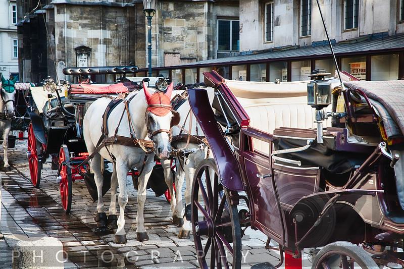Horse-Drawn Carriages Waiting for Passengers, Stefansplatz, Vienna, Austria