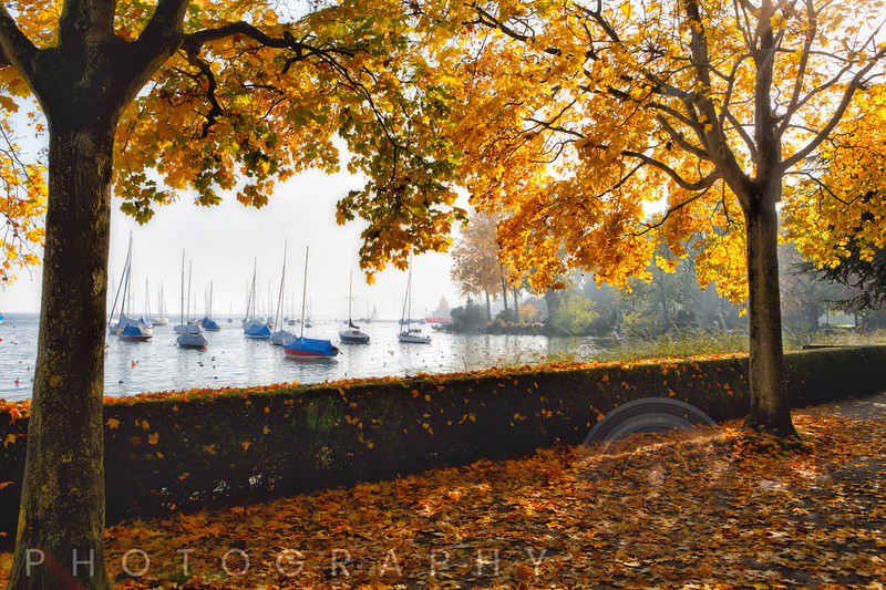 Autumn Scenic at Lake Zurich, Zurich, Switzerland
