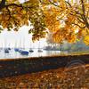 Autumn Scenic at Lake Zurich, Zurich, Switzerland