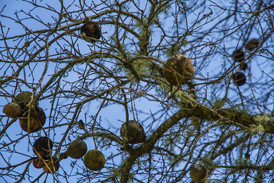Filoli-adaptations_hike-11Mar13-16.jpg