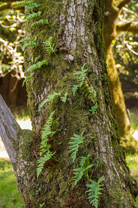 Filoli-adaptations_hike-11Mar13-19.jpg