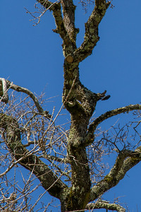 Filoli-adaptations_hike-11Mar13-05.jpg