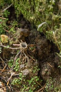 Filoli-adaptations_hike-11Mar13-28.jpg
