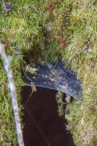 Filoli-adaptations_hike-11Mar13-20.jpg