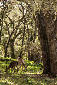 Filoli-adaptations_hike-11Mar13-12.jpg