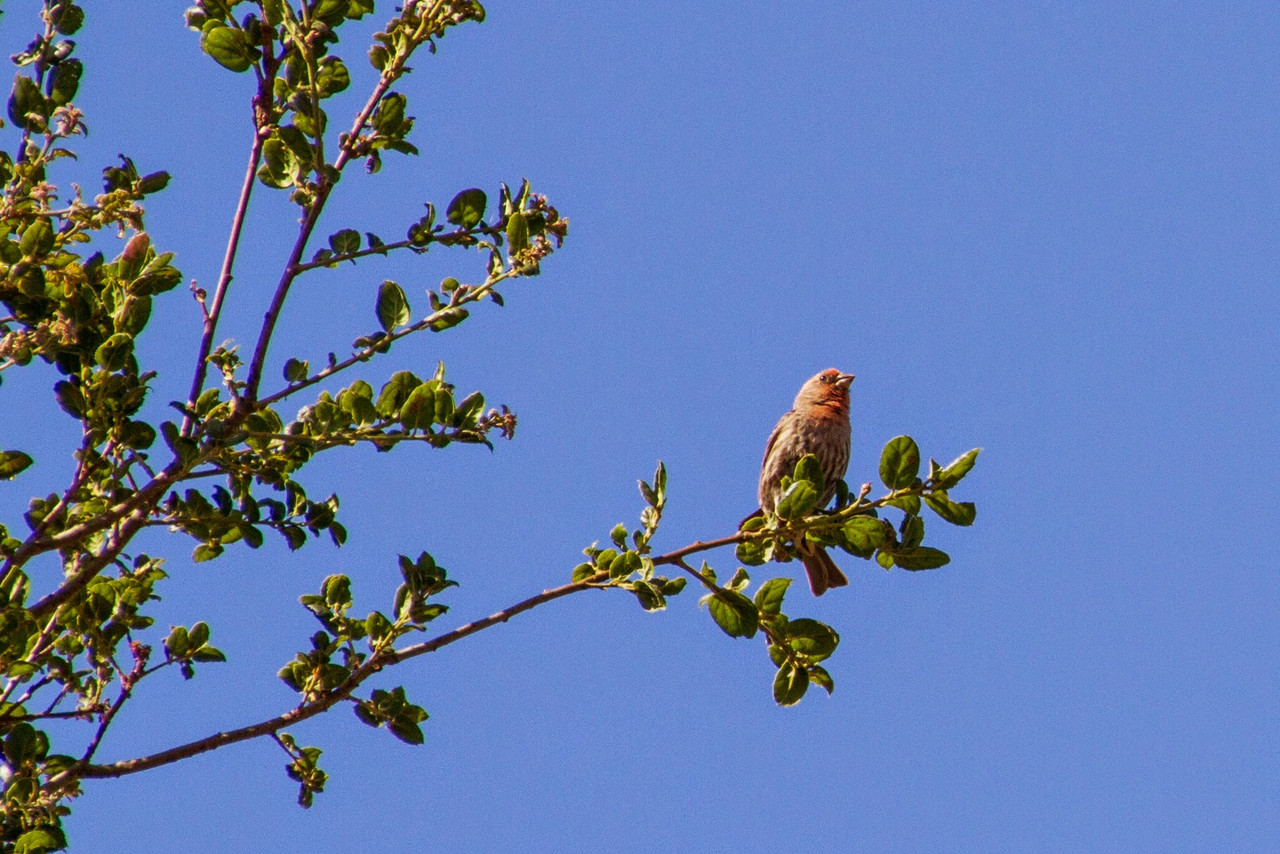 Filoli_Bird_Walk-06.jpg