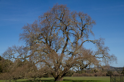 Filoli-check_hike-25Feb13-01.jpg
