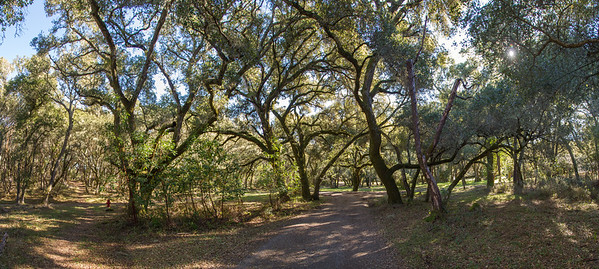 Filoli_Buddy_Hike-Jan1413-pano-01.jpg