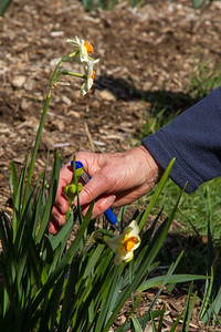 Filoli-theme_hike_4Mar13-10.jpg