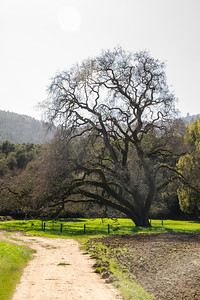 Filoli-theme_hike_4Mar13-21.jpg