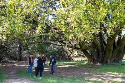 Filoli-theme_hike_4Mar13-28.jpg