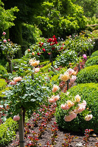 Filoli_Roses-01.jpg