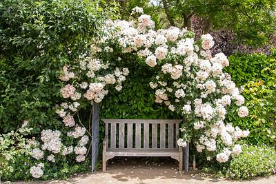 Filoli_Roses-11.jpg