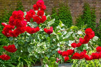Filoli_Roses-05.jpg