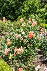 Filoli_Roses-13.jpg