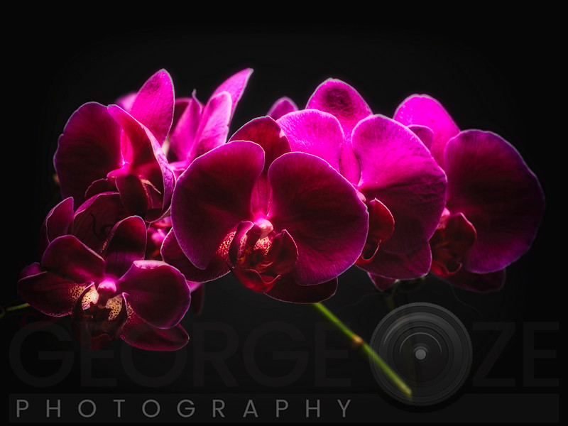 Purple Orchids with Painted Light