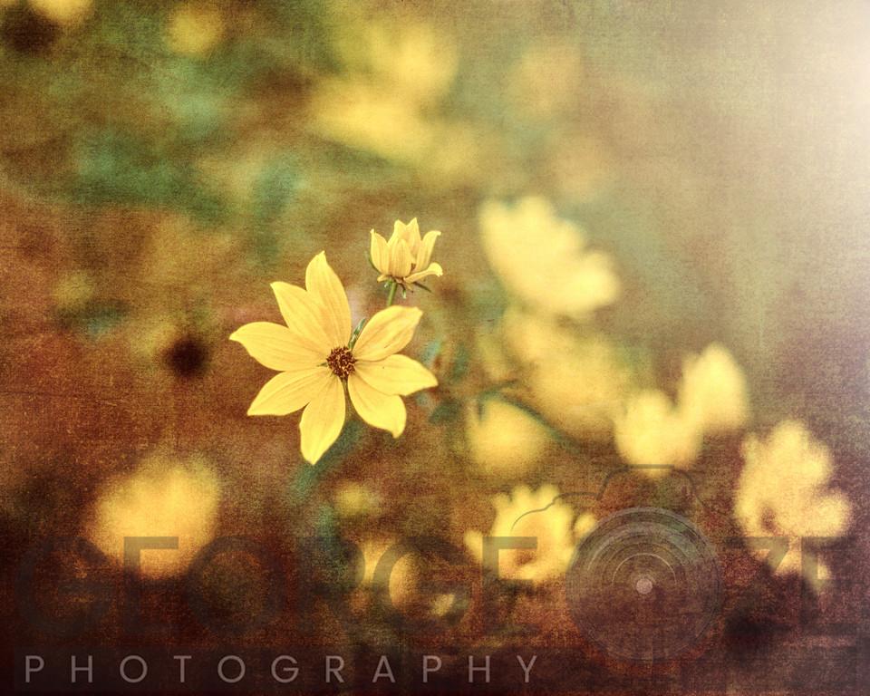 Fairy Tale Meadow