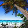 Low Angle View of a Leaning Palm Tree on a Tropical Beach, Trunk Bay Neach, St John, USVI