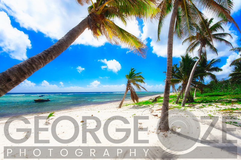 Palm Trees on Breakers Beach, Grand Cayman Island, British West Indies